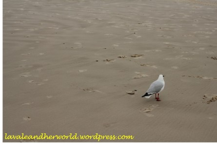 Seagull at the beach (Photo Credit: lavaleandherworld.wordpress.com)