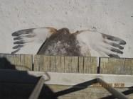 No respect! Seals beach, Kangaroo island (Photo credit: http://www.lavaleandherworld.wordpress.com)