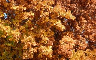 Foliage in Italia 1