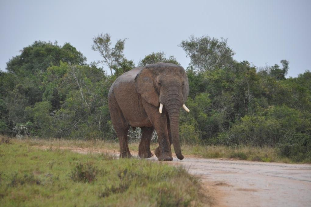 Addo Elephant Park 8