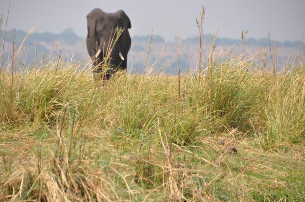 Game drive sul Chobe