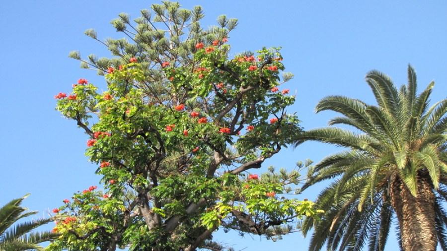 Escursione a Tenerife6
