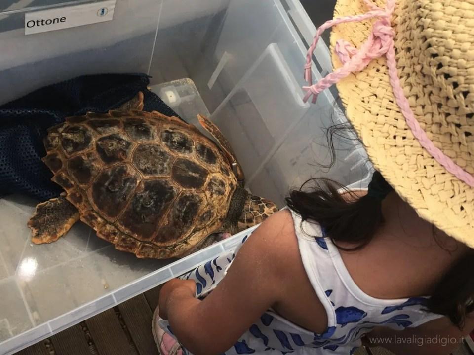 come adottare tartarughe marine