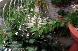 PIC12695_Balcony_Plants_WP