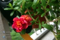 PIC12716_Balcony_Plants_WP