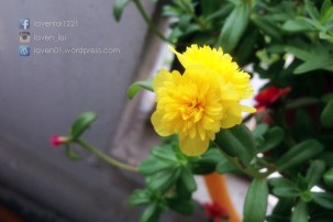 PIC12727_Balcony_Plants_WP