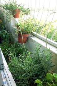 My Balcony's Plants