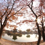 Seoul Sights: Dreaming at the Palace