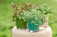 trifolium-sfeer2
