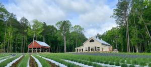 Lavender Oaks Farm