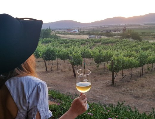 Baja California Guadalupe Valley Wineries