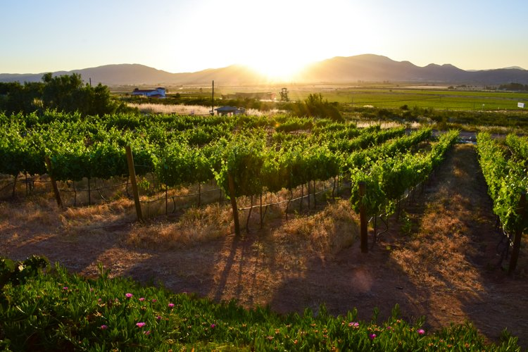 San Diego Bucket List - Temecula Valley