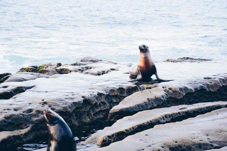 La Jolla Cove - 10 Reasons to Visit San Diego, California