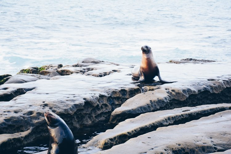 San Diego Bucket List - La Jolla Cove Seals