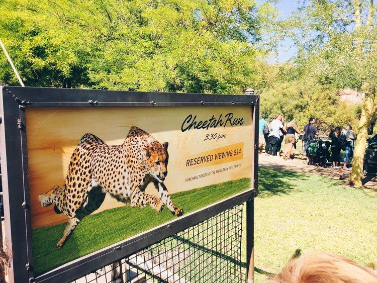 Cheetah Run Safari - Africa Tram - San Diego Zoo Safari Park