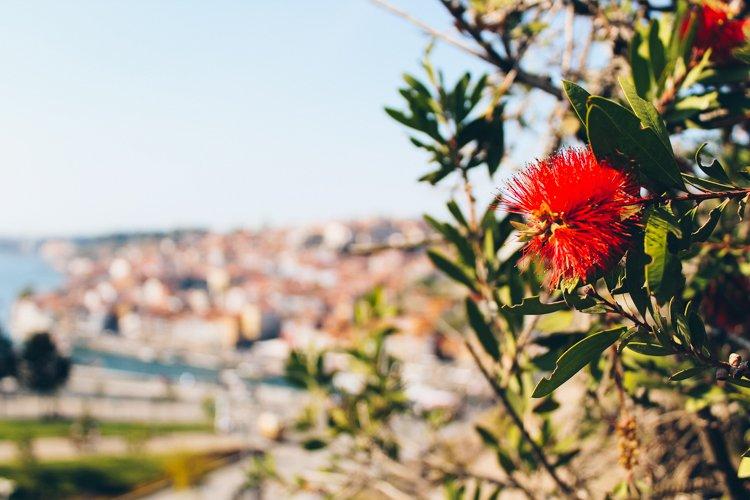 Mosteiro da Serra do Pilar - Things to do in Porto, Portugal