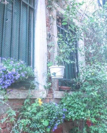 Inspiration for Urban Gardening from Venice
