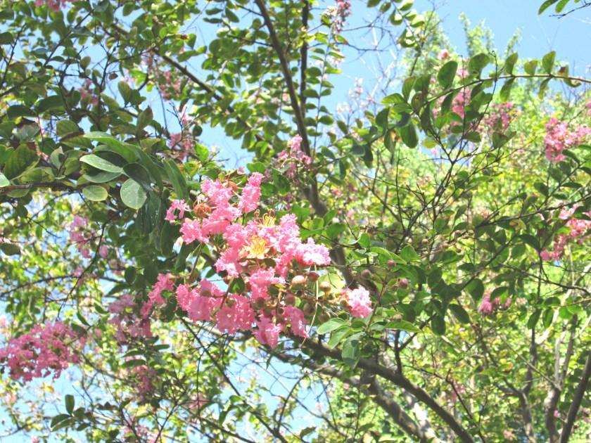 rosa-summer