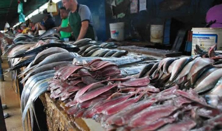 pescado sardina