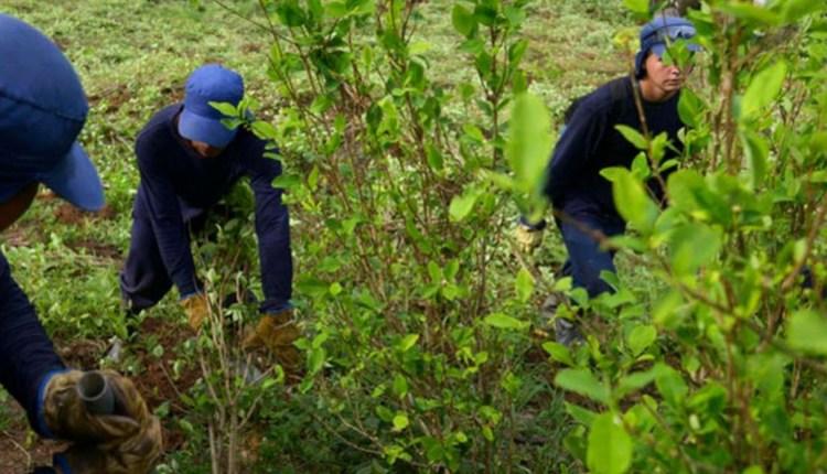 Colombia primer productor de cocaína en el mundo