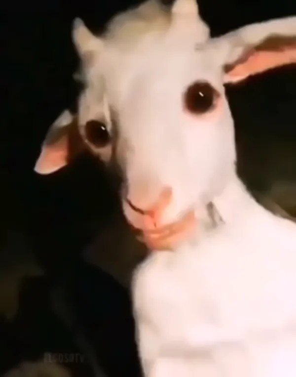 WITH FEAR! Capture terrifying goat stop on two legs