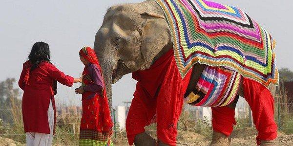 elefanti_india_1