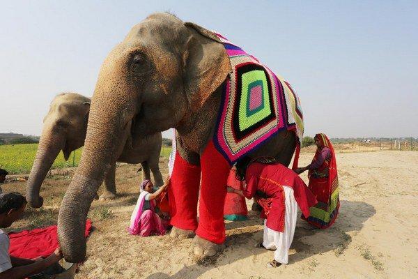 elefanti_india_4