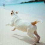 Cani in spiaggia, facciamo chiarezza
