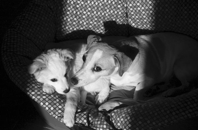 Pippi cucciola e Milla