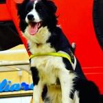 Amatrice per Camilla, e tutti i cani da soccorso