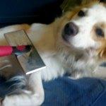 Buone abitudini, per il cane e per la casa
