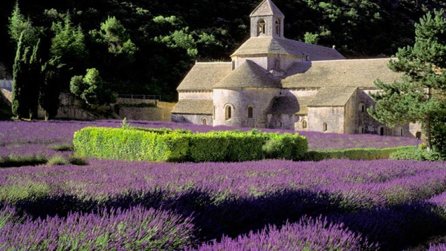 provenza-lavanda-874x492