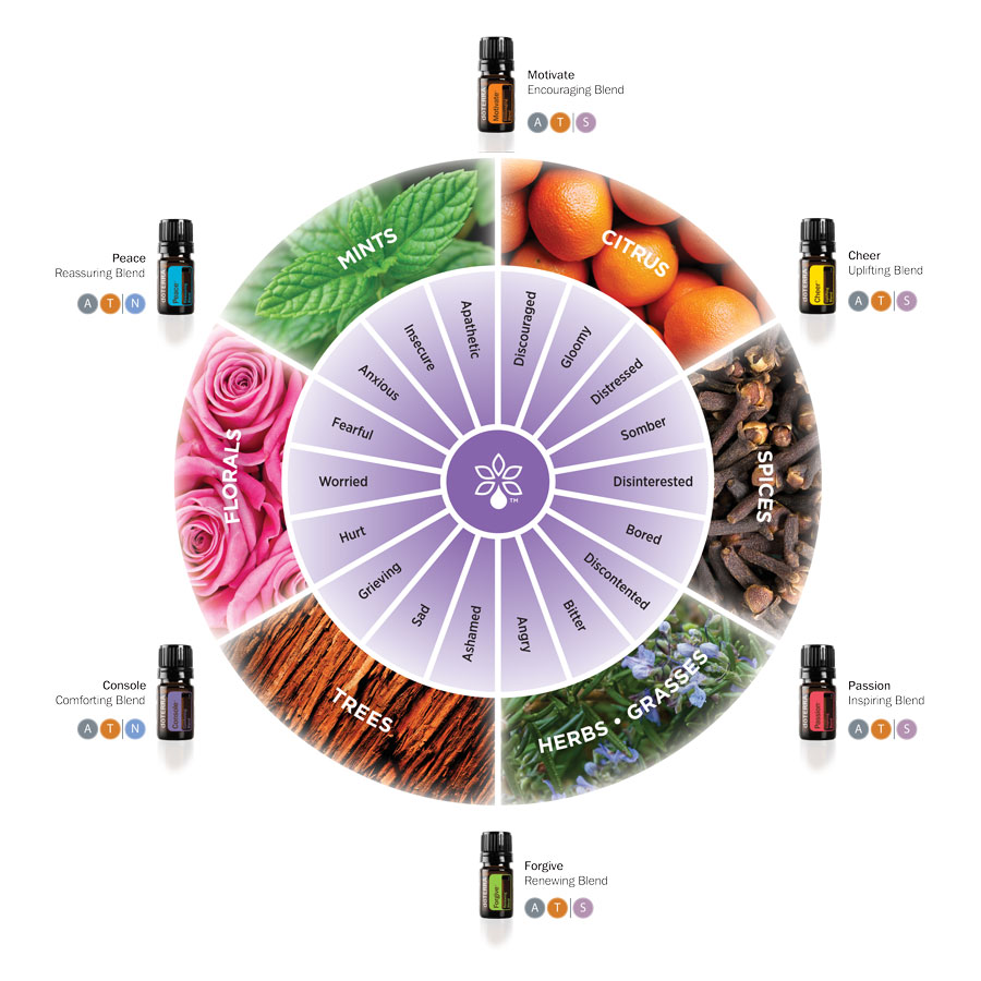 1x1-900x900-emotional-aromatherapy-wheel-us-english-web – Kopi