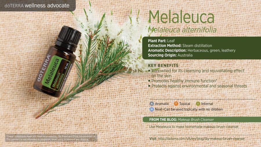 wa-melaleuca