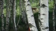 Amichevole_Monte_Farno_22_07_2012_26