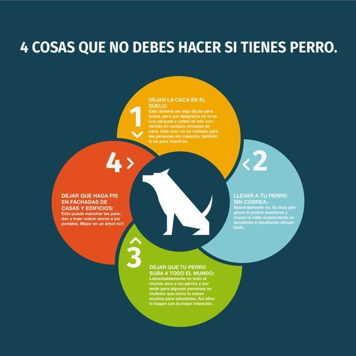 4-cosas-que-no-debes-hacer-si-tienes-perro