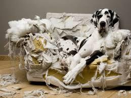 perro-con-ansiedad-por-separación
