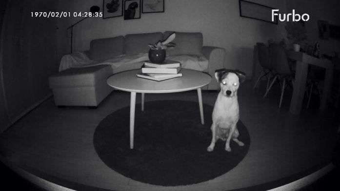 Furbo-dog-visión-nocturna
