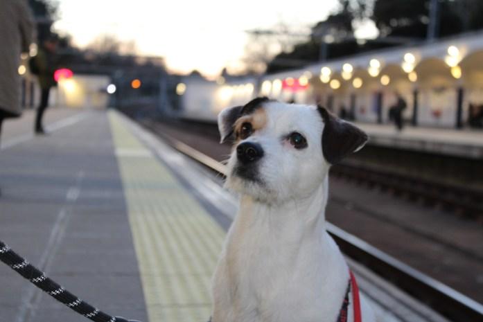 Metro-Madrid-perros
