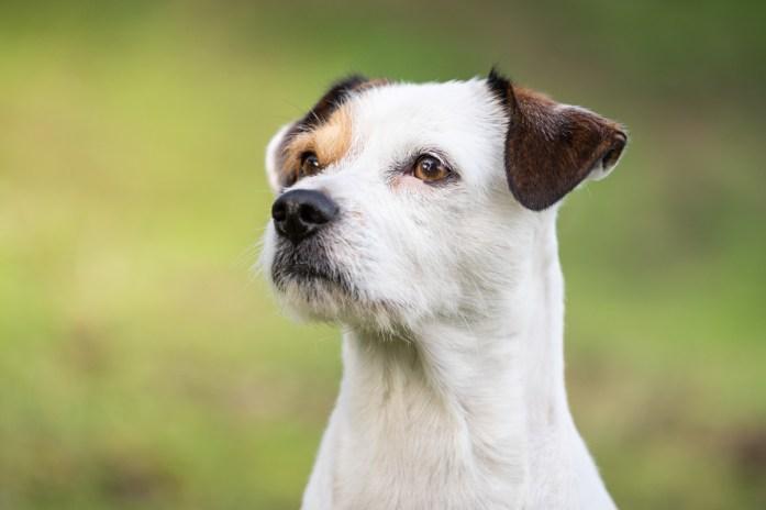 sesión-de-fotos-para-perros