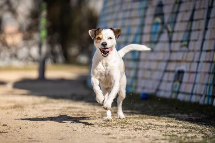 Ideas-para-sesiones-de-fotos-de-perros
