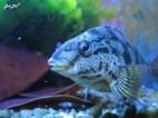 9-aquarium-swakopmund-3