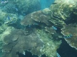 3 snorkeling (9)
