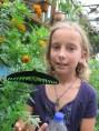 7 butterfly farm (6)