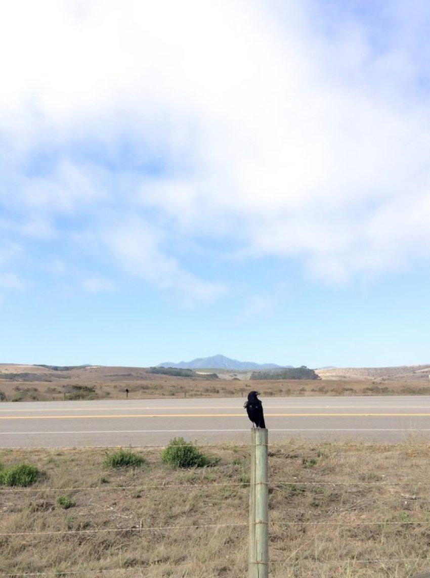Angry bird sur la route 1 en Californie
