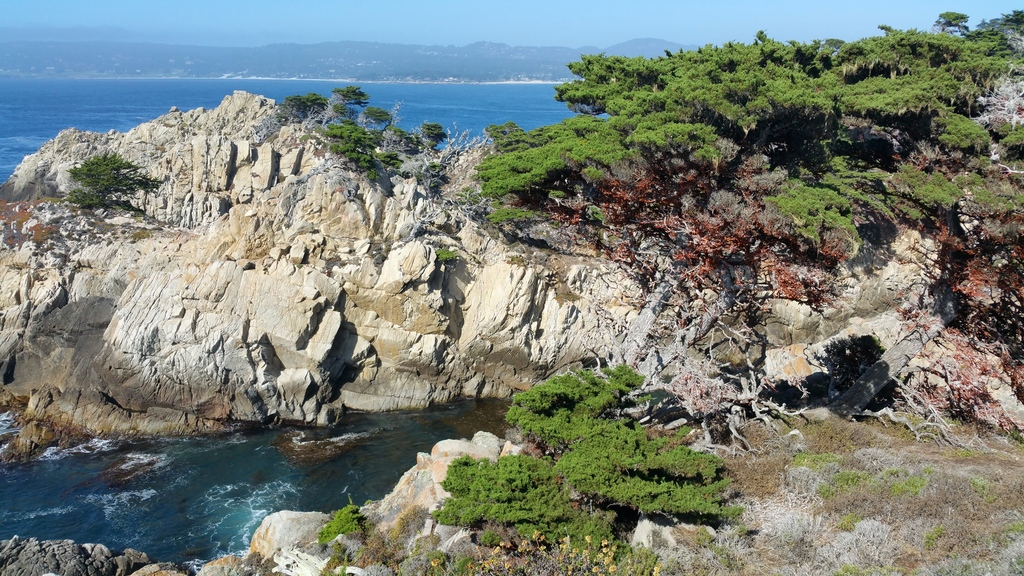 la-vie-en-rose-flamant-point-lobos-falaises-2