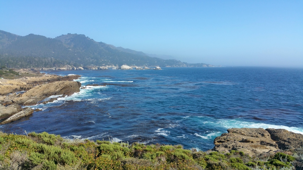 la-vie-en-rose-flamant-point-lobos-falaises-bird-island-4