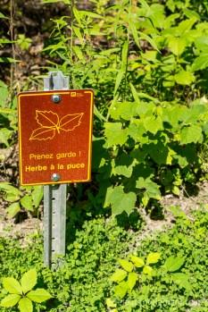 Herbe à puce! Parc national des Îles-de-Boucherville de la Sépaq | lavietoutsimplement.com #parcsquebec