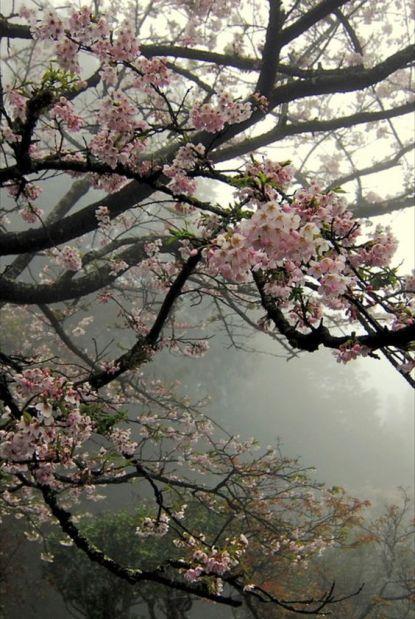 Вишневый Сад Чехов - отзыв