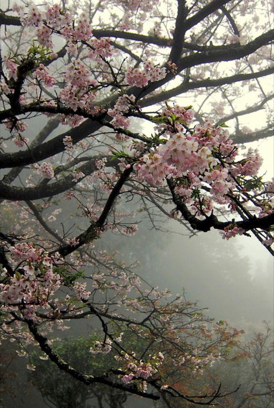 «Вишневый сад» А. П. Чехов — отзыв